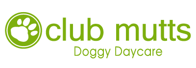 Club Mutts Doggy Daycare