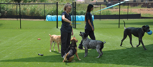 Club Mutts at Crossroads Animal Hospital