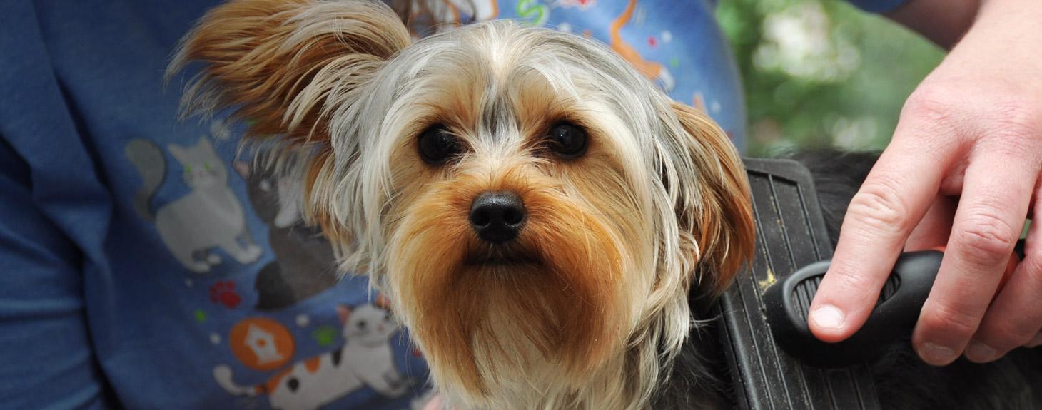 Dog veterinary care at Crossroads Animal Hospital